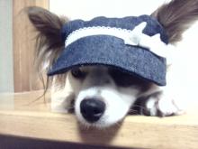『なな』『ひな』のわんこblog-DVC00247.jpg