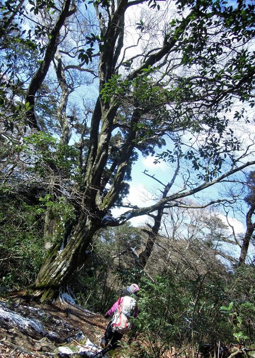 2015,2,1難所ヶ滝-14