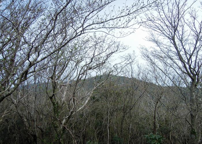 2015,4,12蛤岳~脊振山-5