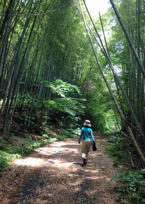 2015,5,31柑子山-5