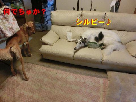 a_20150530111852649.jpg