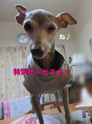 e_20150317213853ee7.jpg