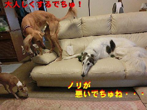 e_20150530111850244.jpg