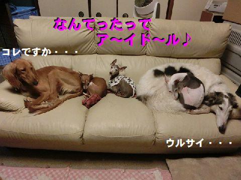 k_20150315103224221.jpg