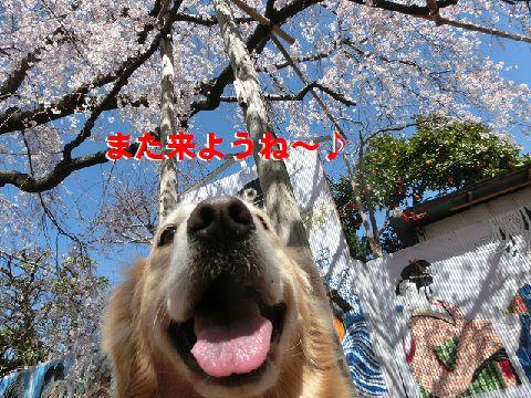 k_20150328113604131.jpg
