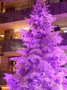 ホワイトツリー (1)