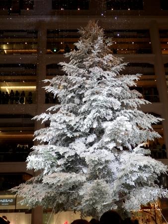 ホワイトツリー (16)
