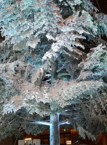 ホワイトツリー (27)