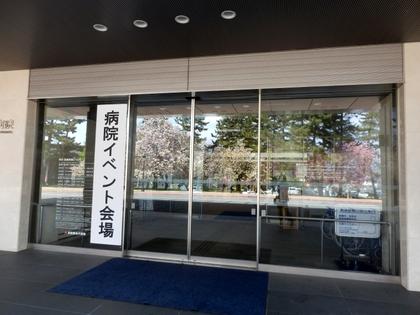 歯科大桜 (4)