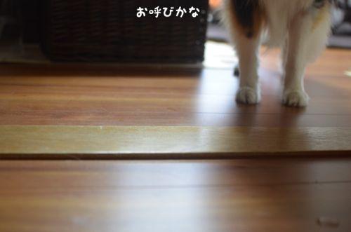 IMG_3949.jpg