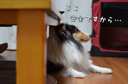 IMG_4477.jpg