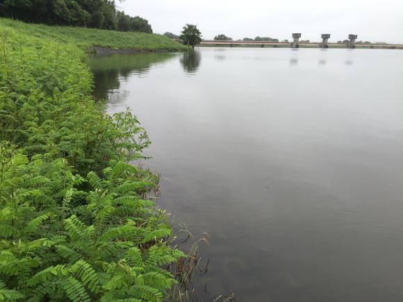 小貝川、朝練釣行