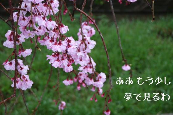 15_0423_07.jpg