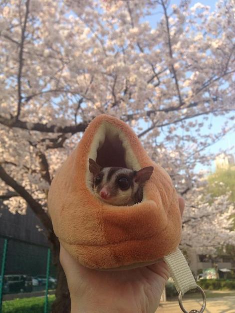 桜2015,3