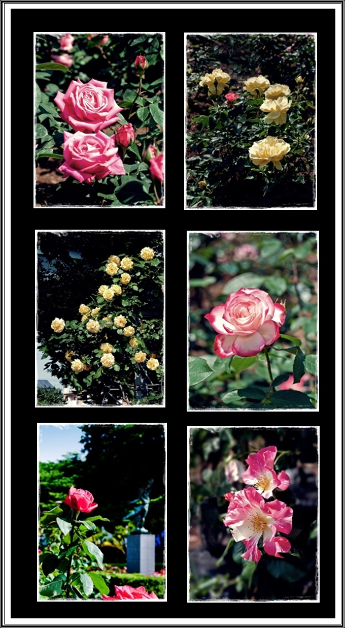 薔薇ウィンド加工