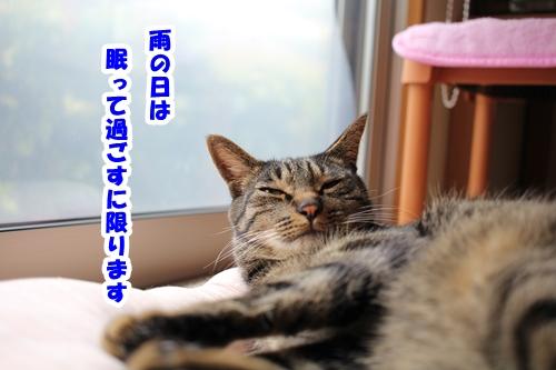 IMG_1167 - コピー