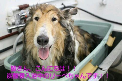 ・抵シ撰シ托シ包シ搾シ・・抵シ也堪豼ッ螻祇convert_20150609231211