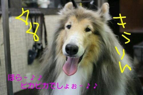 2015-5-26繝斐き繝斐き_convert_20150609231012