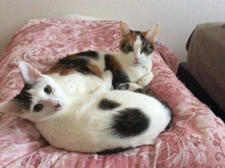 「みぃみぃと寝るの」「えっ!?」