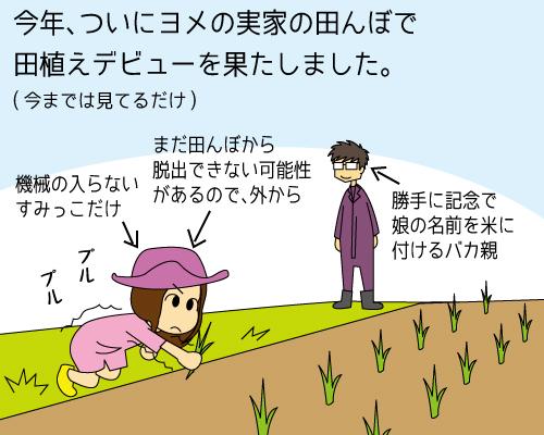 田植え2015