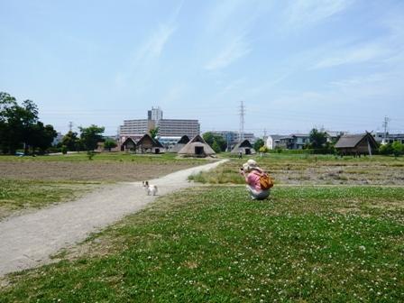 登呂遺跡:公園1