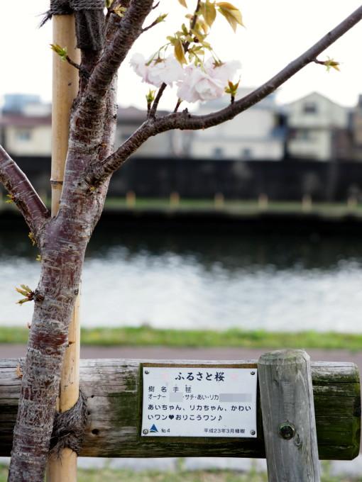 blog-P4115877.jpg