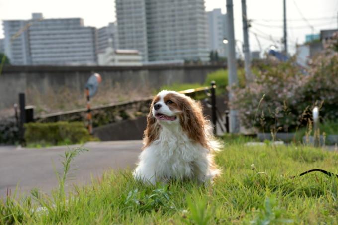 blog_DSC_2130.jpg