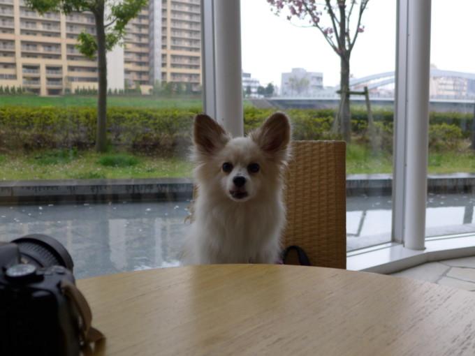 blog_P1140278.jpg