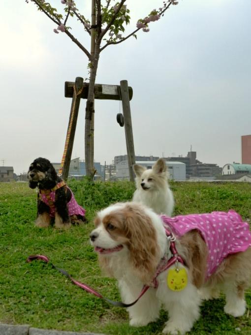 blog_P1140425.jpg