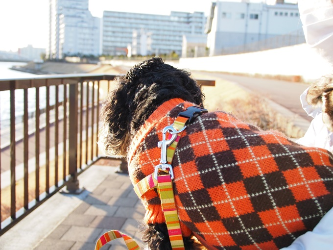 blog_P1180502.jpg