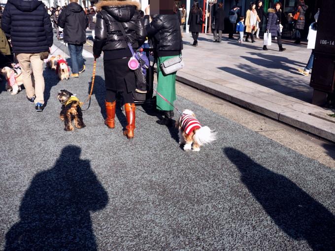 blog_P2110469.jpg
