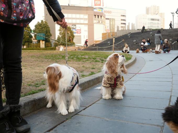 blog_P3151937.jpg