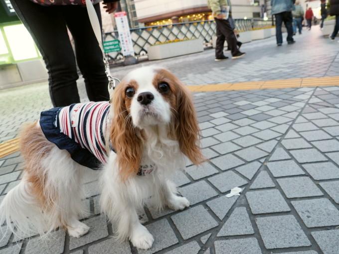 blog_P3151960.jpg