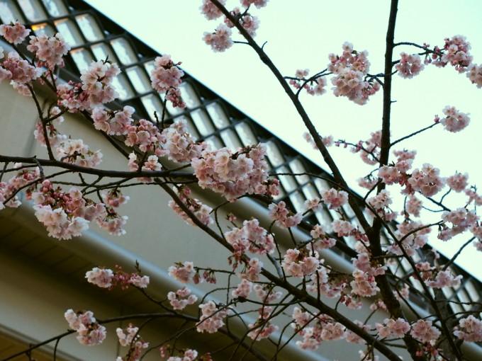 blog_P3151961.jpg