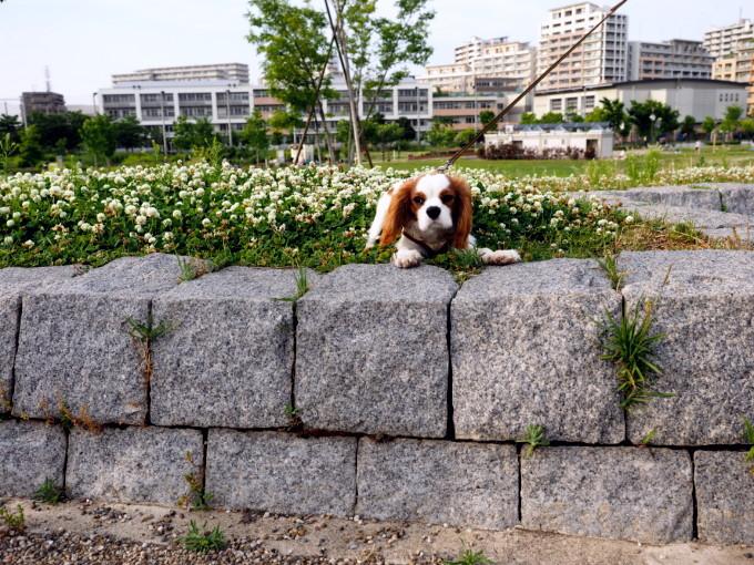blog_P5171249.jpg