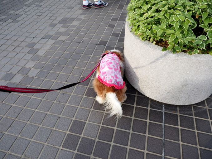 blog_P5301677.jpg