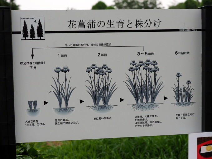 blog_P6132419.jpg