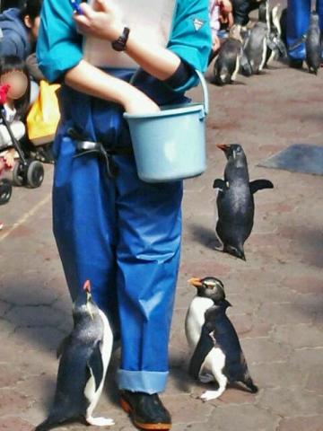 20150329-ICOCA ペンギンさん (4)-加工