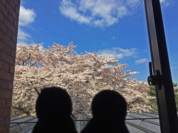 20150402-昼間のお花見 (2)-加工