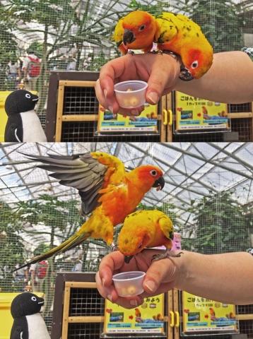 20150502-花鳥園5-インコのスイレンプール (90 91)-加工