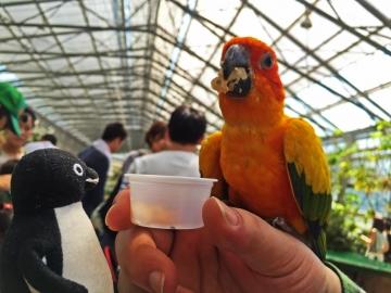 20150502-花鳥園5-インコのスイレンプール (84)-加工