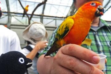 20150502-花鳥園5-インコのスイレンプール (94)-加工
