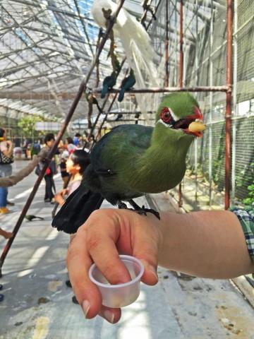 20150502-花鳥園7-エボシドリとヘラサギの広場 (21)-加工