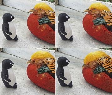 20150502-花鳥園7-エボシドリとヘラサギの広場 (7 8 9 11)-加工
