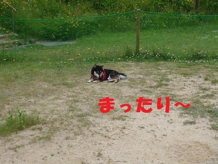 blog9406.jpg