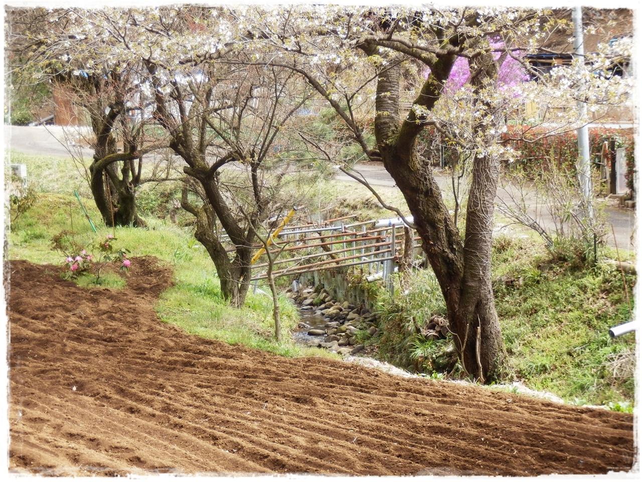 横山の道6
