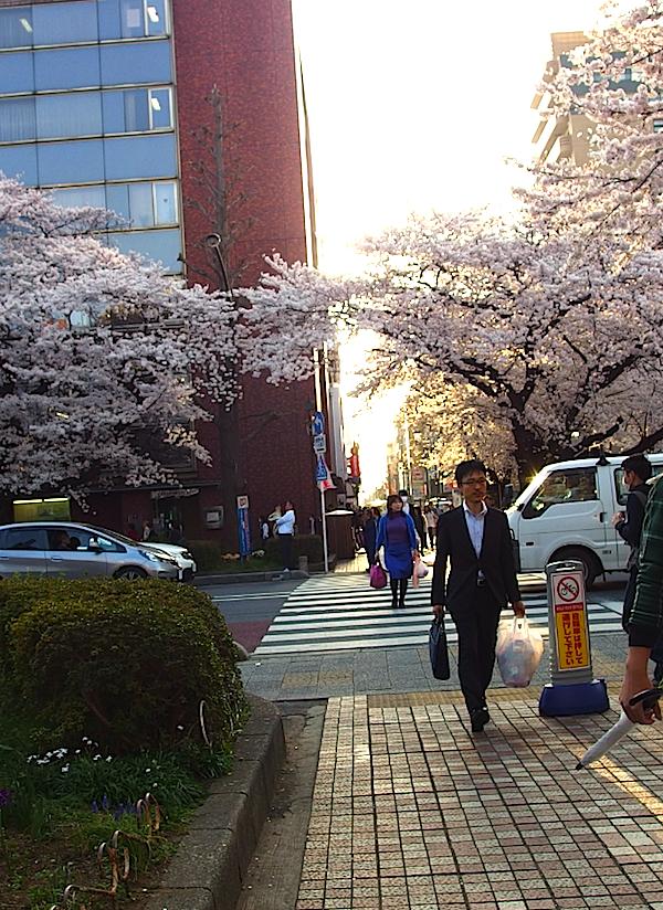 富士見通り方面の横断歩道
