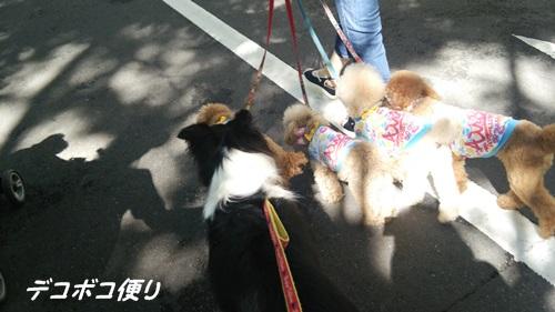 20150602 朝散歩2