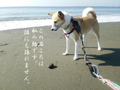 海散歩DSC_1517