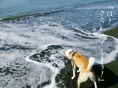 海散歩DSC_1524